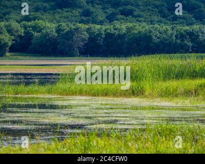 Swampy lake Ponikve island Krk Croatia Europe - Stock Photo