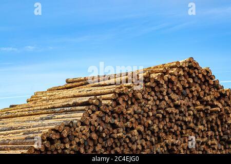 An abundance of prepared logs in a lumber yard - Stock Photo