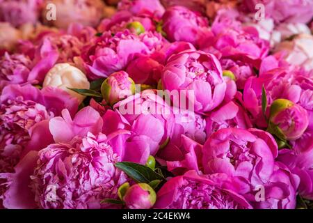 A full frame photograph of pretty pink peonies for sale on a market stall, with a shallow depth of field