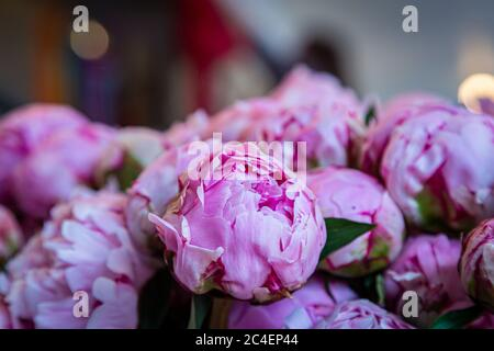 Pretty pink peonies for sale on a market stall