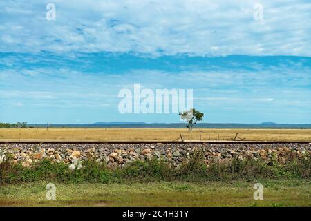 A lone tree beside railway tracks in wide open flat countryside - Stock Photo