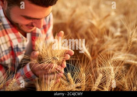 Smiling farmer holding and smelling a bunch of ripe cultivated wheat ears in hands. Agronomist examining cereal crop before harvesting on sunrise - Stock Photo