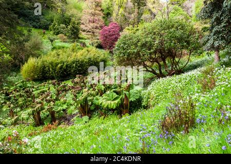 Exotic plants in the British Isles. Endsleigh Hotel in West Devon, England