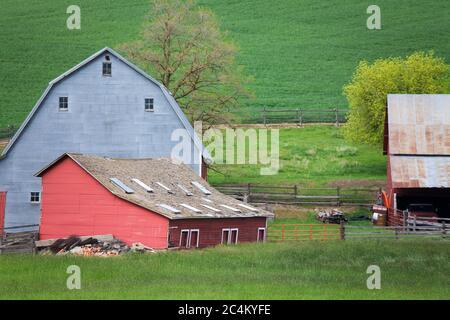 Barn near Pullman, Palouse Region, Spokane, Washington State, USA - Stock Photo