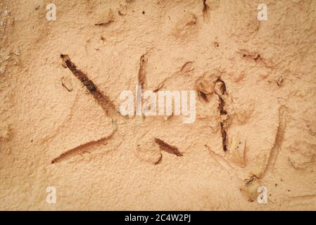 Bird footprints on the ground soil / Bird tracks on mud
