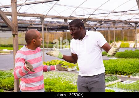 Dissatisfied greenhouse owner scolds an offending employee man - Stock Photo