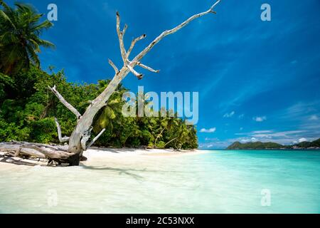 Surreal view with dry tree trunk on sandy beach with palm trees and blue lagoon and sky.