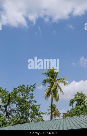 Palm tree over a roofs in Sri Lanka - Stock Photo