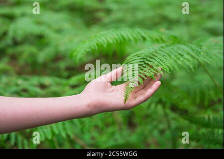 Female hand, with long graceful fingers gently touches the plant, leaves of fern. Close-up shot of unrecognizable person. High quality image.