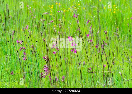 multicolored flowers on the green plain on a beautiful summer day - Stock Photo