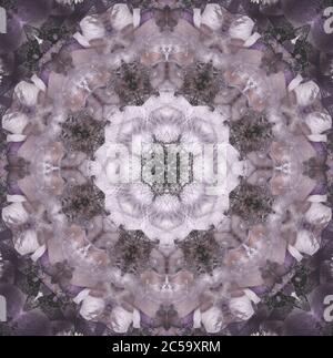 Fine art still life floral pastel ornamental mandala made of macros of pink and violet blue anemone blossoms with detailed texture in vintage painting - Stock Photo