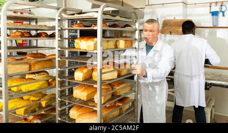 Experienced baker working in small bakery, carrying fresh baked bread on tray rack trolley - Stock Photo
