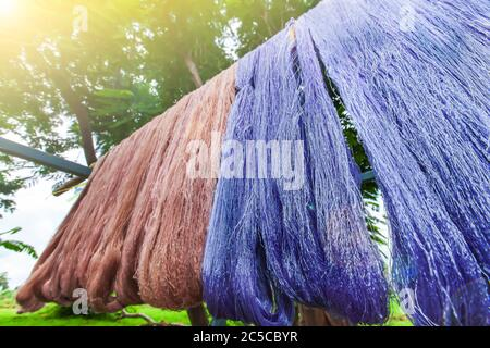 Cotton yarn dyeing with natural colours hanging in sunlight for drying, traditional natural materials, local products of Sing Buri, Thailand.