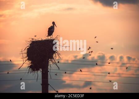 Stork in a nest and flying birds in a sunset sky - Stock Photo