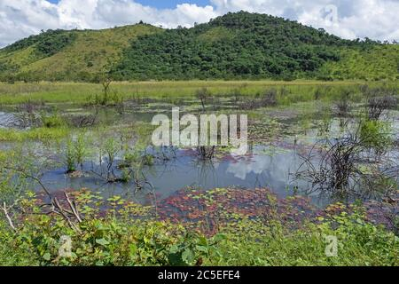 Marshland / swamp along the Linden-Lethem dirt road linking Lethem and Georgetown through the savanna, Guyana, South America - Stock Photo