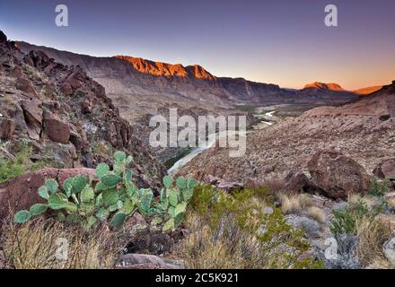 Prickly pear cactus, Rio Grande, Colorado Canyon, sunrise from La Questa (Big Hill), The River Road, Big Bend Ranch State Park, Texas, USA - Stock Photo