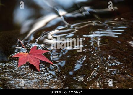 Autumn leaves floating on water with autumn colors and lights - Stock Photo