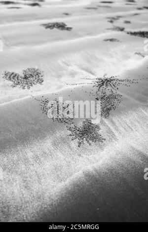 Abstract burrow of Ghost crabs on the sandy beach, land sand art of crabs. Monochrome. Close-up. Horizontal. Focus on the burrow.