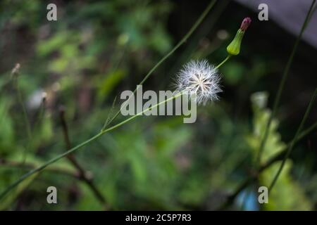 It looks magical and ready to fly away - Stock Photo