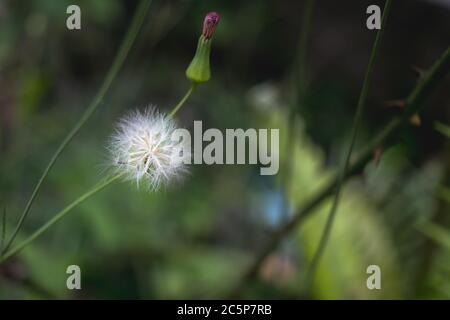 it is like if a fairy just put some magic in this plant - Stock Photo