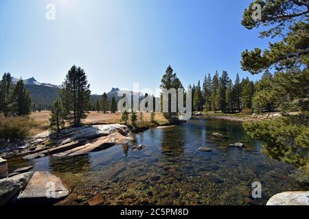 Tuolumne river passing through the sub alpine Tuolumne meadows, with trees and mountains in the background in Yosemite national Park, California