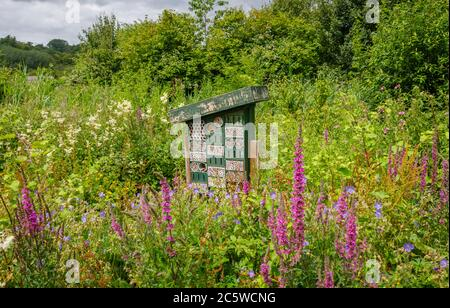 Bug hotel in a flowery summery setting at the Wildfowl & Wetlands Trust in Arundel. West Sussex, south-east England
