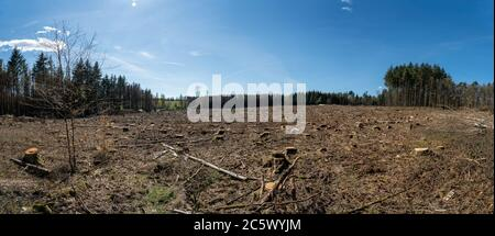 felled trees symbol for the forest dieback in germany due to periods of extreme heat and dryness - Stock Photo