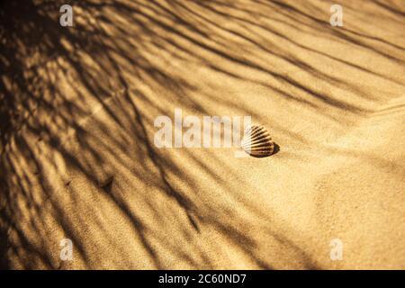Camber Sands, sandy beach in England