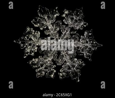 Snow Crystal, Snowflake magnified under microscope, Lillehammer, Norway - Stock Photo