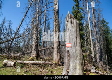 Dead trees in the Berchtesgadener Land National Park, Schönau, Berchtesgadener Land, Upper Bavaria, Bavaria, Southern Germany, Germany, Europe - Stock Photo