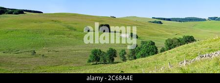 Rolling landscape of fields, Aubrac Plateau, Cantal, Auvergne Rhone Alpes region, France, Europe