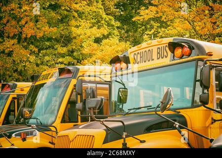 Yellow school buses in parking lot against beautiful autumn foliage trees. Back to school concept. - Stock Photo