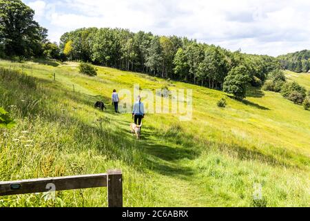 Two ladies taking their dogs for a walk along the Wardens Way in the valley of the River Windrush near the Cotswold village of Naunton, Gloucestershir - Stock Photo