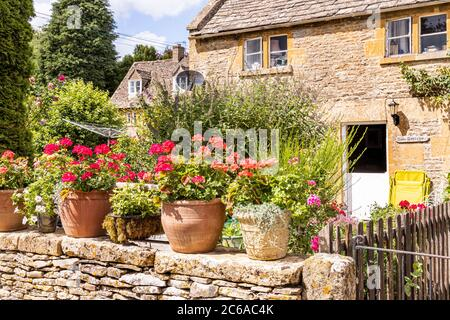 Geraniums in pots outside Rose Cottage in the Cotswold village of Naunton, Gloucestershire UK - Stock Photo