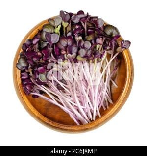 Radish seedlings with red leaves in wooden bowl. Sprouts of Raphanus sativus, an edible root vegetable. Young plants and microgreen. Isolated on white - Stock Photo