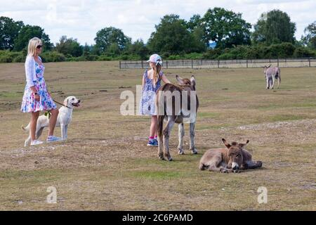 New Forest, Hampshire, UK. 11th July 2020. UK weather: Donkeys enjoy the sunshine in New Forest National Park with visitors.  Credit: Carolyn Jenkins/Alamy Live News - Stock Photo