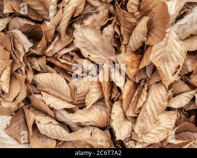 Natural organic pattern of autumn leaf. Macro view. Texture of the sheet tree. Leaves lying on the ground in the forest lit by sunlight - Stock Photo