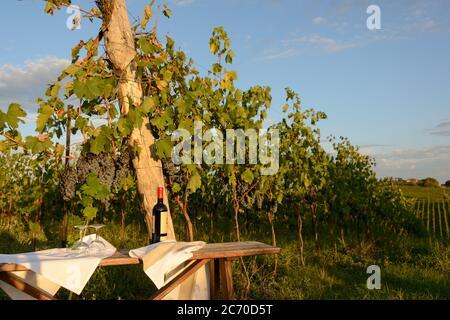 Weinprobe im Weinberg der Tenuta di Monaciano bei Siena - Stock Photo