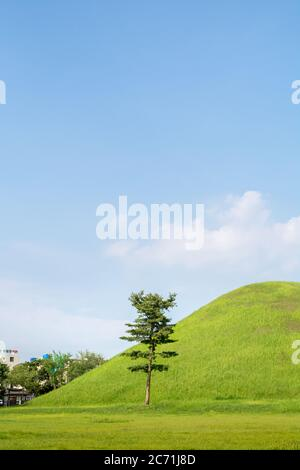 A single pine tree in front of the royal tomb in Daeruengwon, Gyeongju, South Korea. Capital city of Silla dynasty. UNESCO world heritage. - Stock Photo