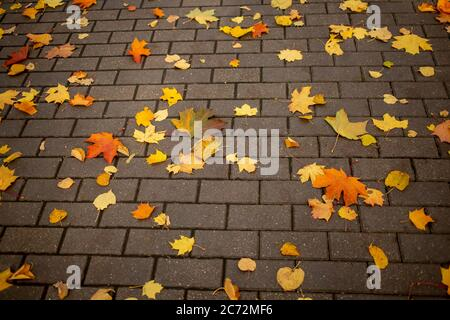 texture, background fallen yellow autumn maple leaves lie on a tile of a park path in an autumn park on a sunny day - Stock Photo