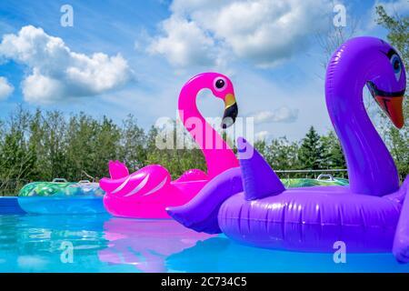 Inflatable Flamingo toy, swimming pool - Stock Photo