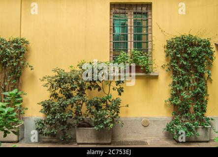 Yellow exterior wall of a house with a traditional window and plants in flower pots, Milan, Italy.