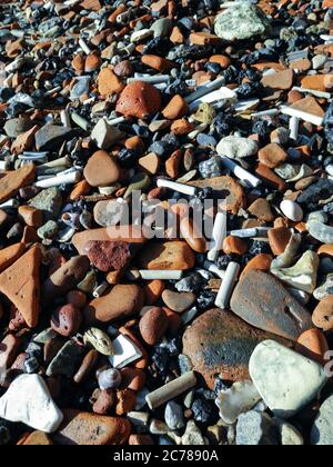 Clay pipe stems and Roman tiles on the Thames foreshore, London, UK Stock Photo