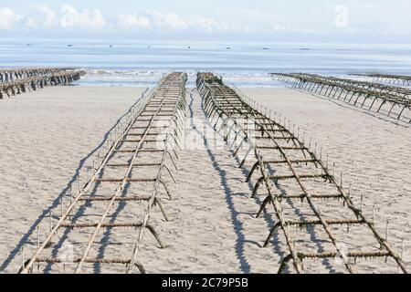 Oyster farming, oyster tables on Utah Beach in Normandy - Stock Photo