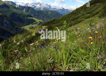 Beautiful Alps mountains view. Blooming meadows and hiking path in sunny summer day. Mount Jenner at the Berchtesgadener Land. National park, Bavaria - Stock Photo