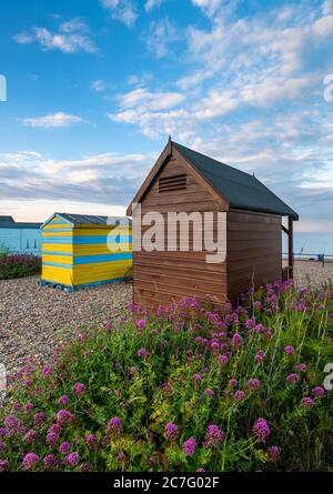 Beach huts on Kingsdown beach near Deal with Red Valerian flowers in the foreground.