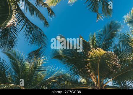 Tropical background, coconut palm leaves on a background of blue clear sky, summer background, travel, nature. Frame, place to insert text or slogan.N