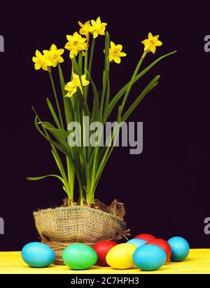Colourful Easter composition. Painted eggs of different colours lying on yellow wooden table near pot of yellow daffodils isolated on black background, spring still life. Holiday concept