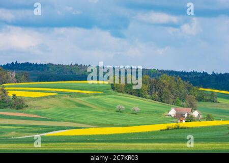 Röhrenbach, field with rapeseed, farmhouse, in Waldviertel, Niederösterreich / Lower Austria, Austria - Stock Photo