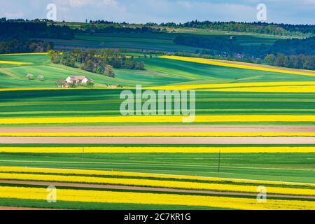 Röhrenbach, field with rapeseed, farmhouse, in Waldviertel, Niederösterreich / Lower Austria, Austria - Stock Photo
